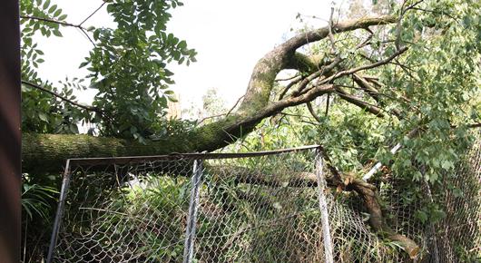 大木が強風で倒れ、学校のフェンスを破損。