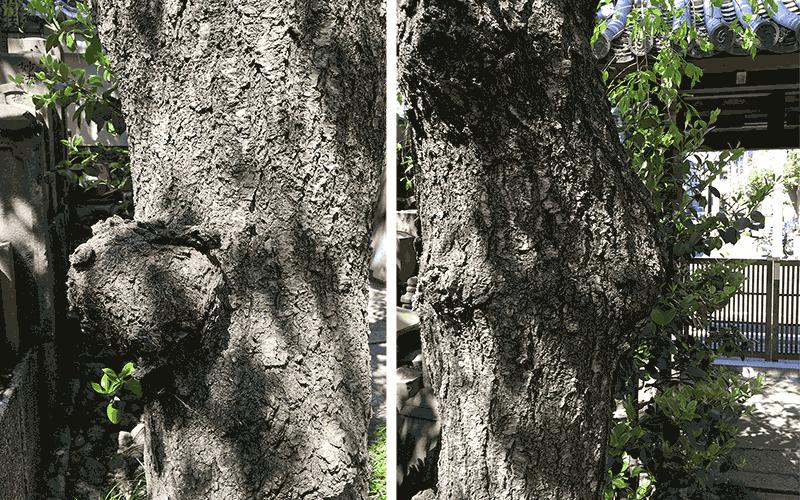 樹木の腐朽イメージ